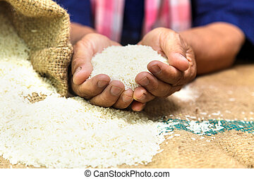 Farmer with rice in the hand