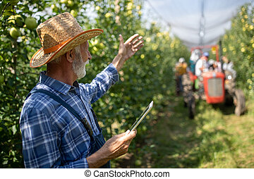 Farmer with tablet in apple orchard