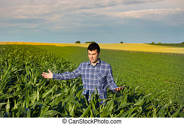 Farmer with tablet in corn field