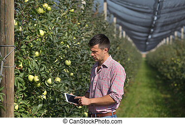Farmer with tablet in orchard