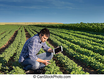 Farmer with tablet in soybean field - Young handsome ...