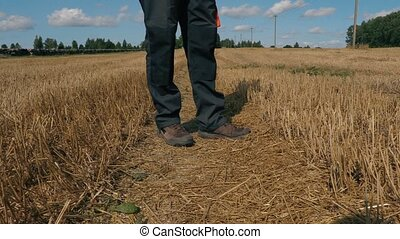 Farmer with tablet on field in summer