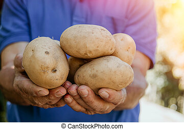 farmer with the harvest of potatoes in his hands