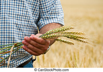 Farmer with wheat in hands.