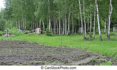 farmer woman birch tree