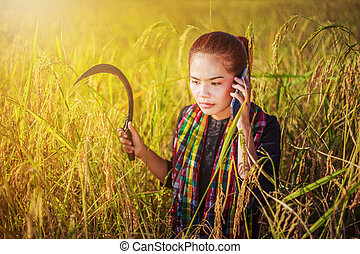 farmer woman calling on the mobile phone in a rice field, ...
