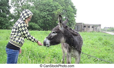 farmer woman donkey feed