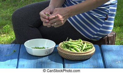 farmer woman hands hull fresh green peas on blue wooden table. 4K