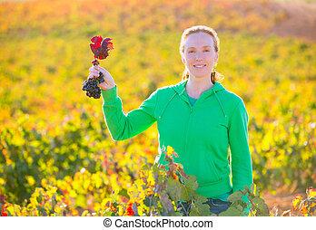 Farmer woman in vineyard harvest autumn in Mediterranean