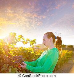 Farmer woman in vineyard harvest autumn leaves in mediterranean