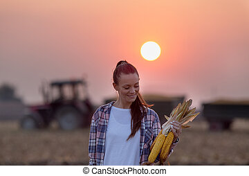 Farmer woman with corn cobs during harvest in field