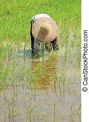 farmer work
