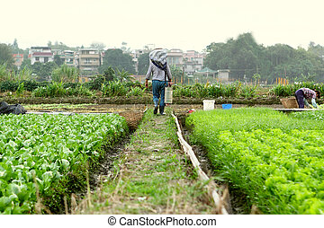 farmer working in cultivated land