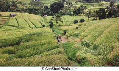 farmer works on a plantation