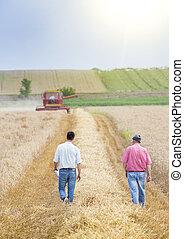 farmers, в, пшеница, поле, в течение, уборка урожая