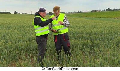 Farmers checking rye field
