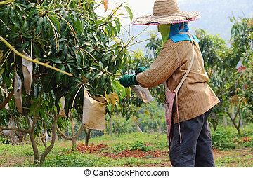farmers - Farmer was working in the farmland at Thailand