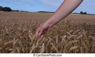 Farmer's hand on the cereal ear