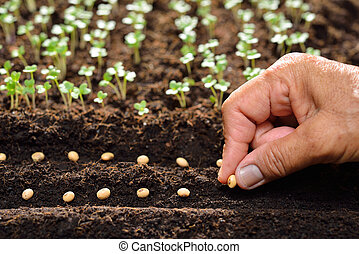 Farmer's hand planting seeds in soil (planting)