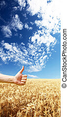 Farmer's hand symbolize this year's good harvest on yellow wheat