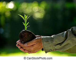 Farmer's hands holding a green young plant with seed on nature background