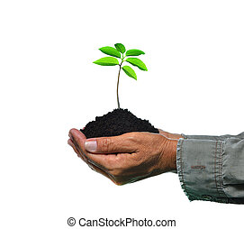 Farmer's hands holding a green young plant isolated on white background
