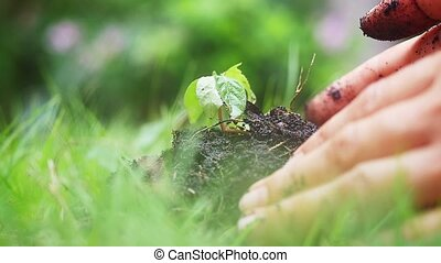 Farmer's hands holding and putting back organic soil,...