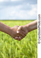 Farmers handshake in green wheat field.