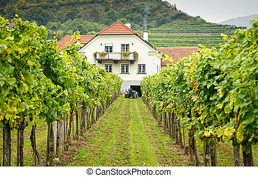 Farmers House in a Vineyard - Farmers House in an austrian...