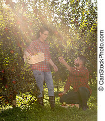 Farmers in apple orchard