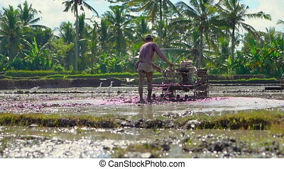 Farmers in South-Eastern Asia plow a rice field using a hand...