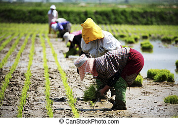 Farmers in the rural landscape Korea