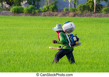 Farmers is sowing fertilizer in the farm