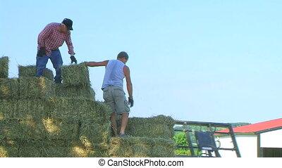 Farmers loading hay onto truck.