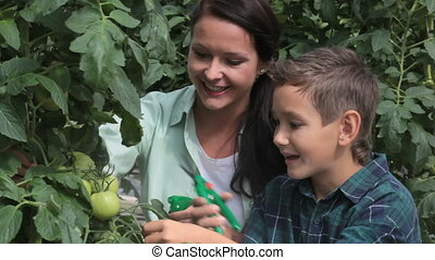 Farmers - Woman and little boy in the greenhouse