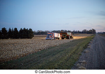 Farmers working at night to harvest the maize crop