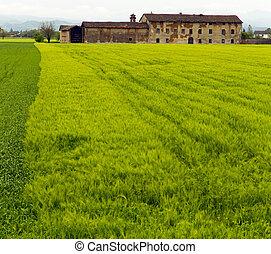 Farmhouse in the green field