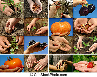 farming collage - farmer hands in action