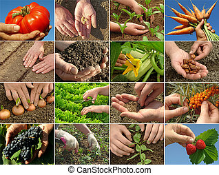 farming collage - hands of farmer in action