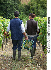 farming couple in field picking grapes