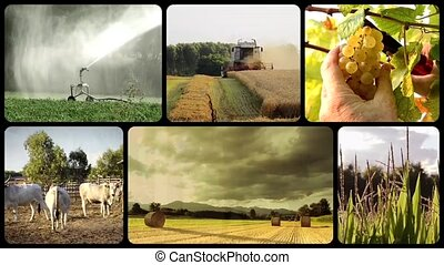 farming - country life and farming montage