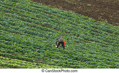 A worker working on a farm in the Caribbean country side.