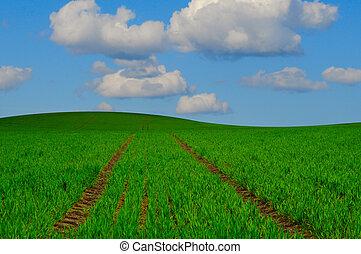 Farming Landscape - Green field landscape with blue sky