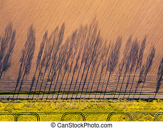 Farming. Shadow of trees. Aerial photography.