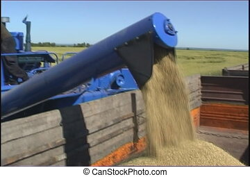 Farming. - The Ripened wheat collects the combine.