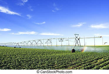 Farming tool - irrigating a potato field