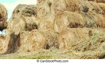 Farming tractor laying hay stacks on farming field. Agricultural industry