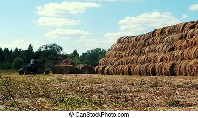 Farming tractor loading hay stacks on agricultural field. Agricultural industry