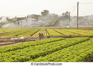 Farmland and houses