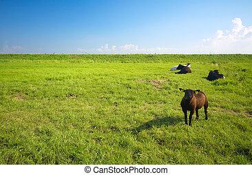 farmland, do, léto